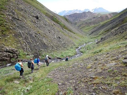 jpg A team of UAF students and paleontologists, along with Denali National Park employees, explore Denali's backcountry in search of dinosaur fossil in July 2016.