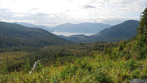 Public Comment Sought On Draft of Tongass-Specific Roadless Rule; Preferred alternative could resurrect timber industry in Southeast Alaska