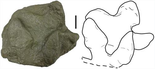 Dozens of Dinosaur Footprints Reveal Ancient Ecosystem of Alaskan Peninsula