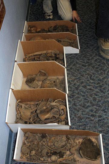 jpg Ancient skeletons of McGrath raise questions