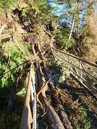 Wind Damages Naha River National Recreation Trail