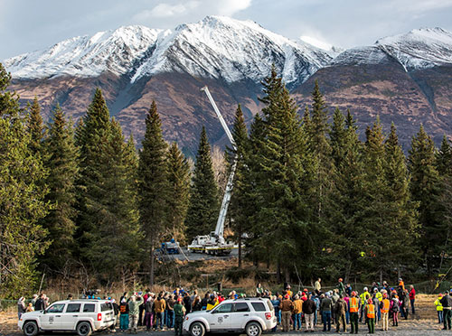 jpg Tree cutting in the Chugach National Forest