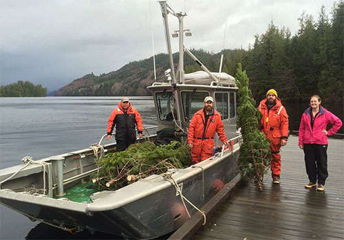 """jpg Seven """"Companion Trees"""" are also being provided by the Tongass National Forest"""