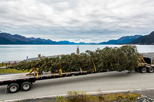 jpg The tree leaving the Chugach National Forest, followed by a caravan of caretakers