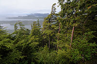 Tongass National Forest Draft Land Management Plan Amendment  Available for Public Comment