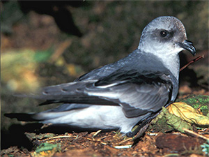 jpg Why do seabirds eat plastic?