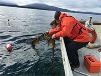 Professor studies seaweed aquaculture