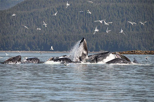 New Study Shows Economic Importance of Alaska's Whale-Watching Industry