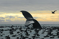 Fisheries of Bristol Bay Off Limits to Oil & Gas Development; Legacy of Alaska Advocates Honored
