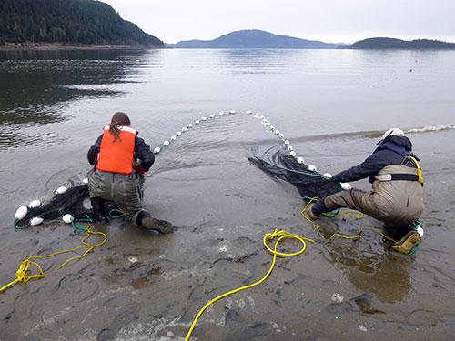 jpg Emily Whitney and Doug Duncan pull in a seine net.