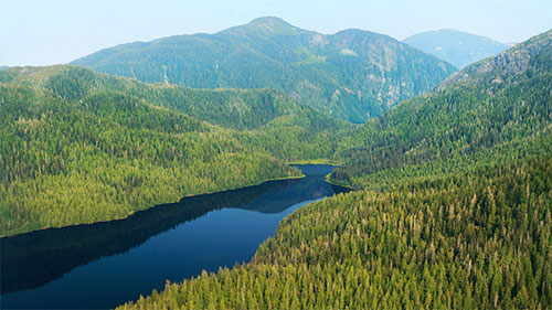 jpg Amended Tongass Forest Plan Focuses on Transition to Young Growth Harvest and Renewable Energy Development