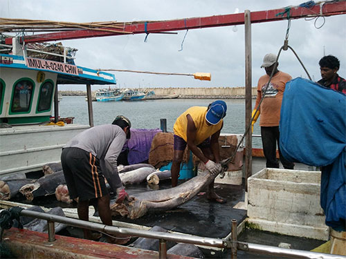 jpg Investing in fisheries management improves fish populations