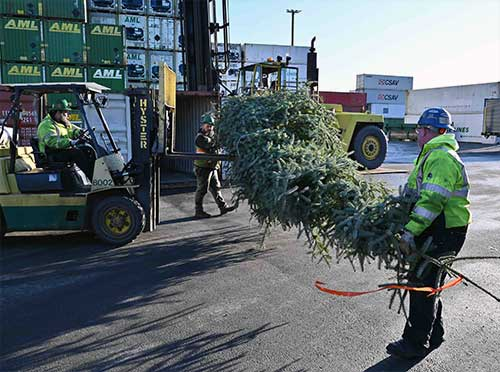 """Governor Announces 2019 Christmas Open House; Ketchikan Area Tree Chosen As """"2019 Together Tree"""""""