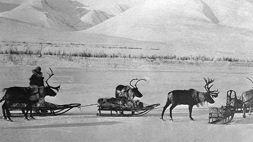 When Reindeer Moved the Mail in Alaska