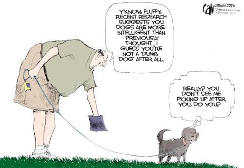 jpg Dumb Dog