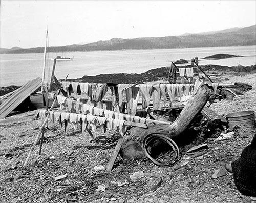 jpg Camping site of King Salmon trollers at Vallenar Point, 1902
