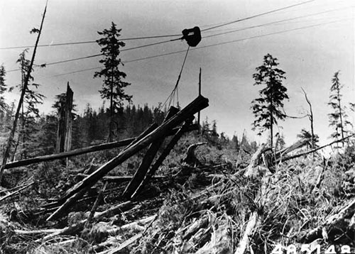 jpg Skyline logging by Ketchikan Pulp Co. in Neets Bay, August 8, 1957.