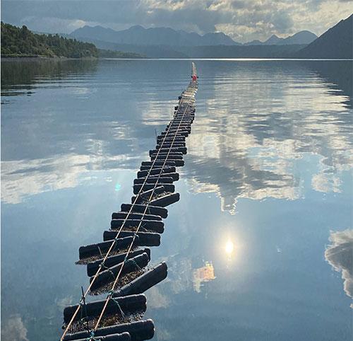 jpg Floating oyster growing system by Erik O'Brien at Larsen Bay, Kodiak