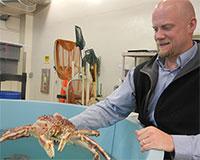 Bering Sea crab stocks show impacts of acidic oceans