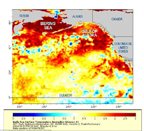"jpg Pacific Ocean ""Blob"" Concerns Scientists"