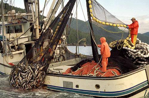 jpg Economic Value of Alaska's Seafood Industry