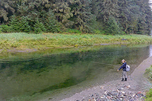 jpg Angler stands at a pool of pink salmon.