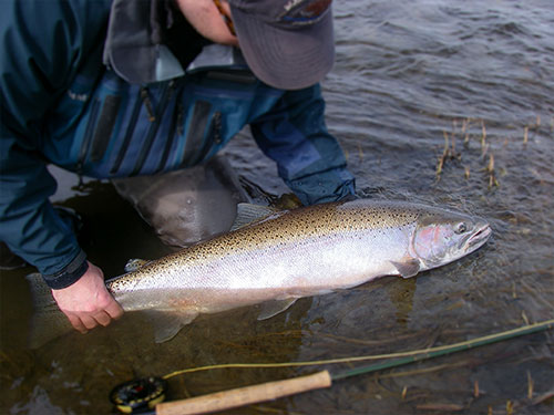 jpg Hunting for fish in Alaska's steelhead-bearing rivers and streams  By MARY CATHARINE MARTIN
