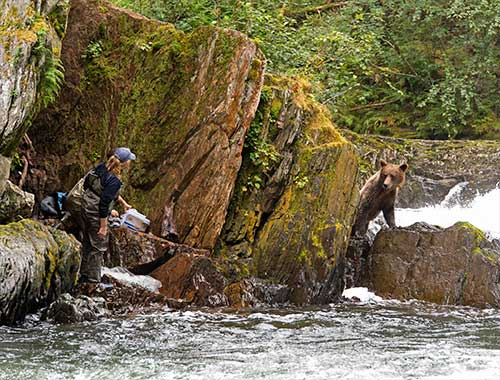 jpg Sweetheart Creek south of Juneau is a popular fishing location for both bears and people.