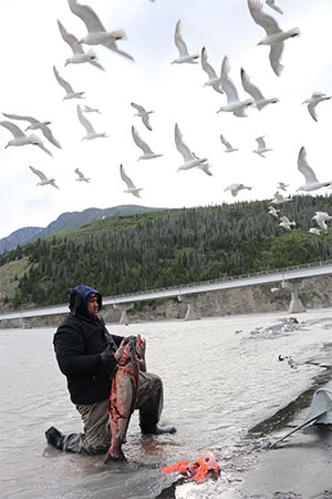 jpg Tasi Fosi of Anchorage, who has been dipnetting in Chitina since 1991, holds up two king salmon on July 9, 2018 as seagulls hover overhead.