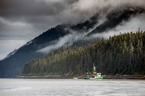 Working for free: What's the dollar value of wild salmon produced by the Tongass and the Chugach?