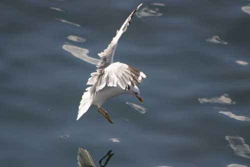 Front Page Photo - Seagull by Carl Thompson...
